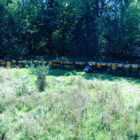 Stanoviště včelstev